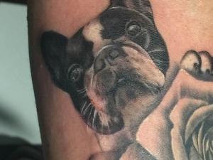Tatuaje Bull Dog Francés Hamahiru 13 Ink Tattoo & Piercing
